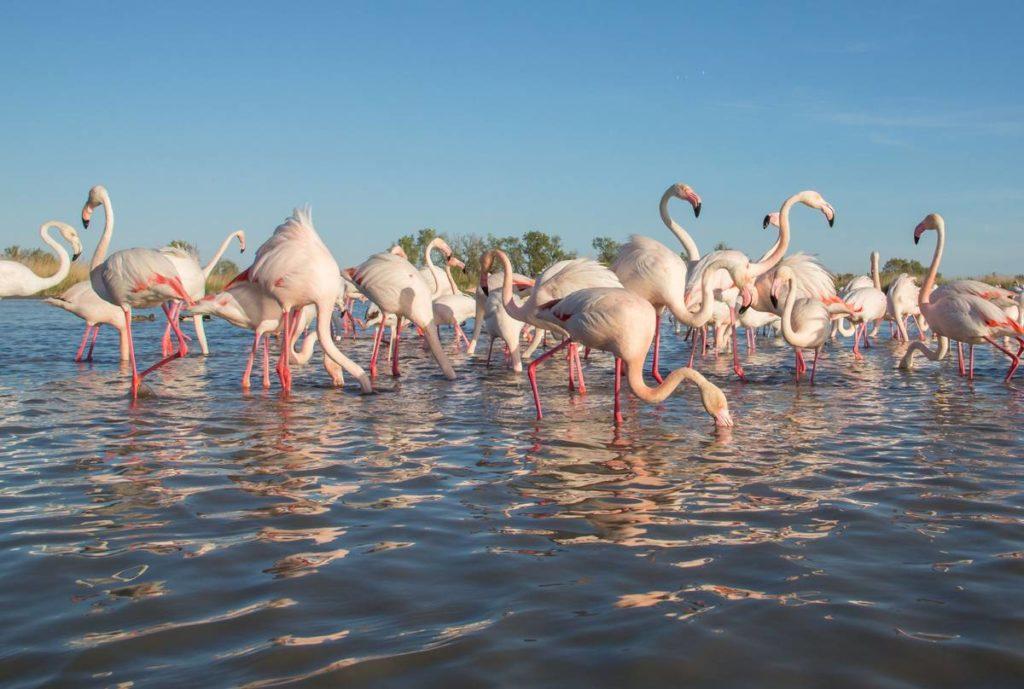 Региональный природный парк Камарг